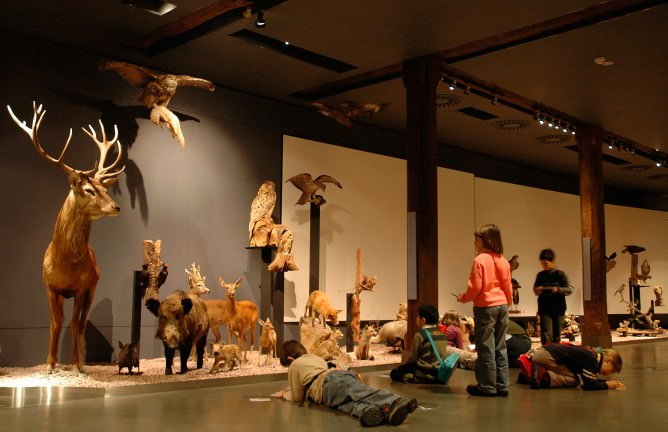 muzeul-naturii-luxemburg