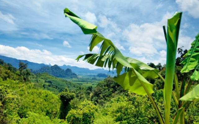 insulele capului verde (6)