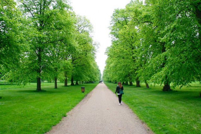A footpath in Kensington Gardens, London. Love the green.