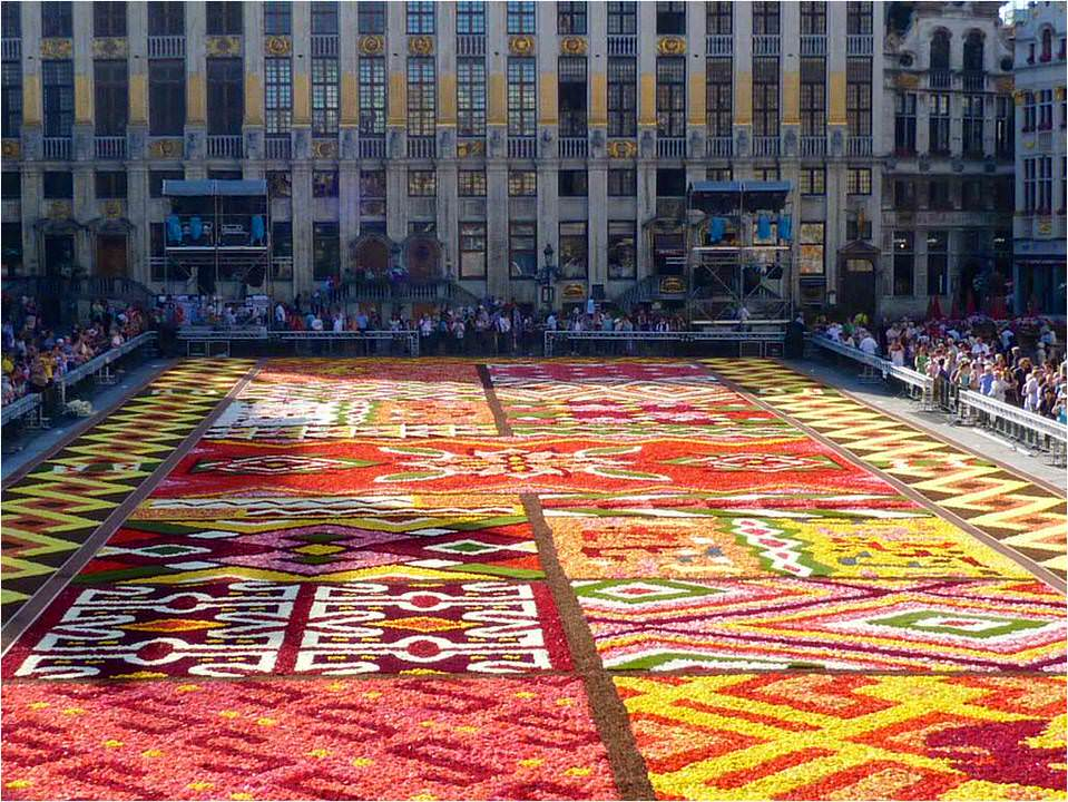brussels flower carpet 2012 20