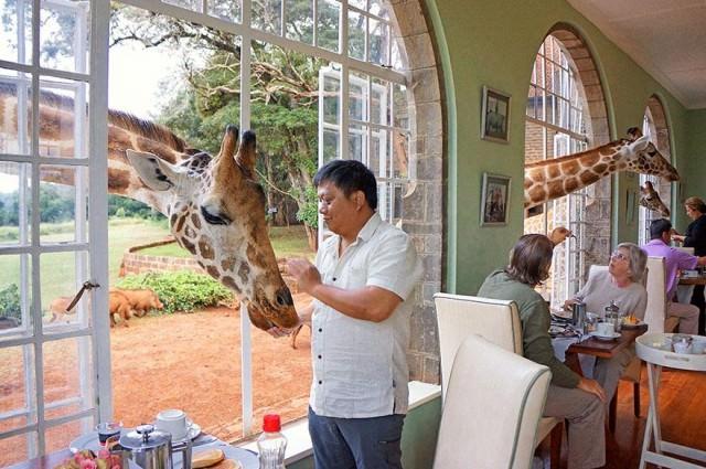 07 - 4 Giraffe Manor Kenya