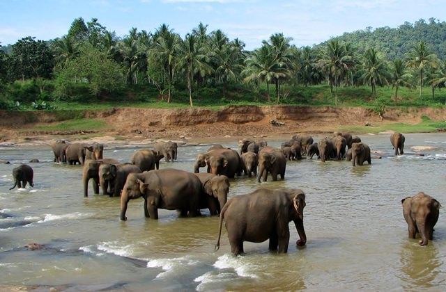 orfelinat-elefanti-sri-lanka (1)