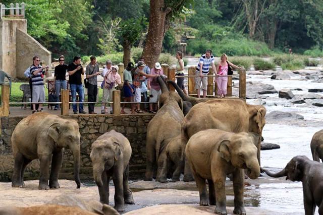 orfelinat-elefanti-sri-lanka (2)
