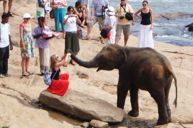 orfelinat-elefanti-sri-lanka (3)