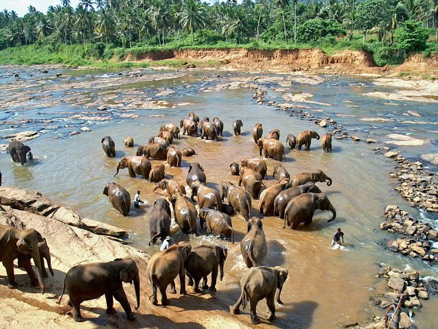 orfelinat-elefanti-sri-lanka