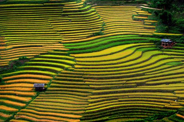 Rice-Terrace-Fields-Vietnam