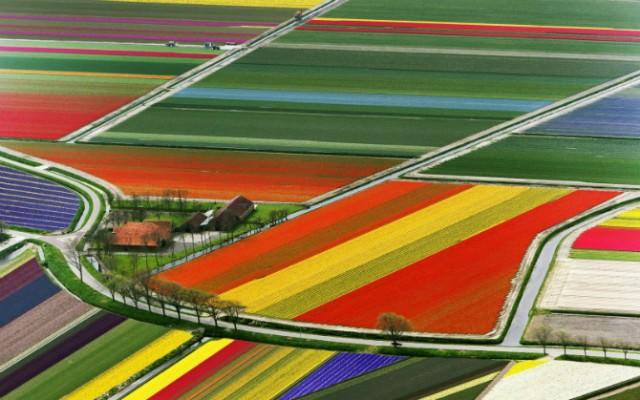 The-Netherlands-Tulip-Fields