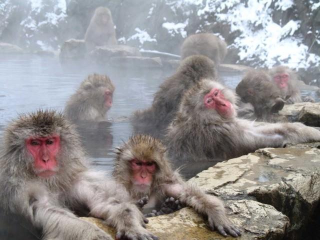 jigokudani-monkey-park
