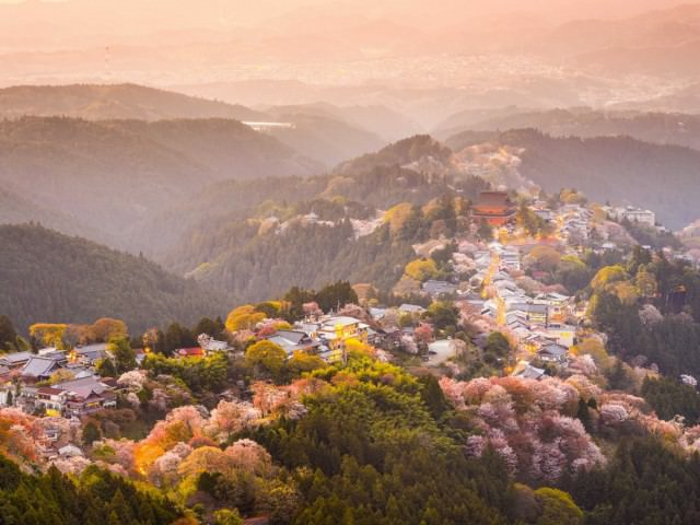 mount-yoshino-in-the-nara-prefecture-is-considered-one-of-the-best-areas-to-view-cherry-blossoms-with-over-30000-of-the-magnificent-trees