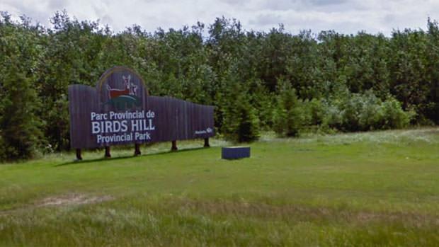 birdshill