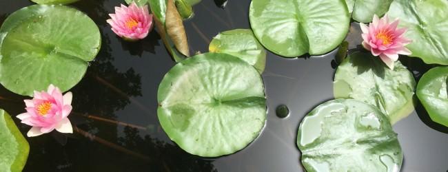 Cele mai frumoase grădini botanice din lume