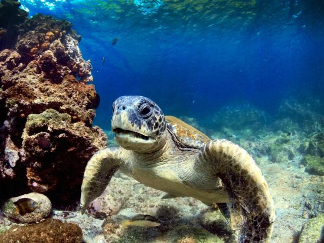insula galapagos