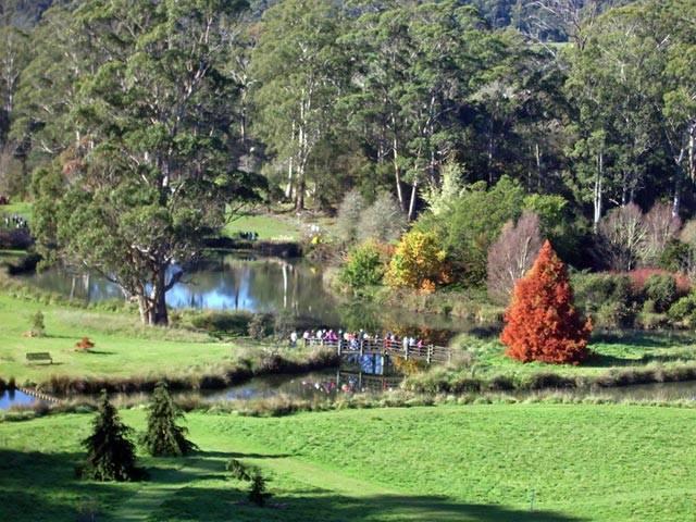 tasmanainaarboretum1