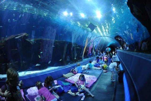 aquarium-riodejaneiro