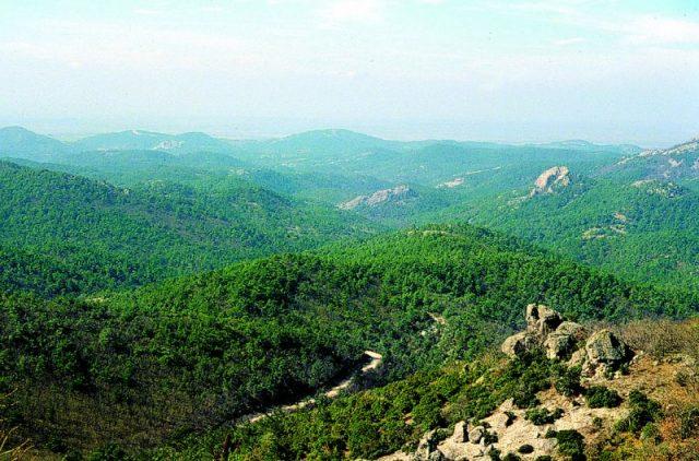 pădurea Dadia