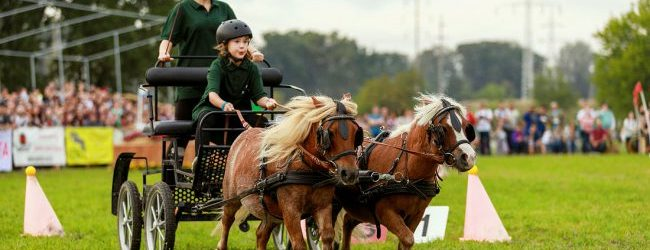 Prima ediţie a Karpatia Pony Show are loc la Floreşti