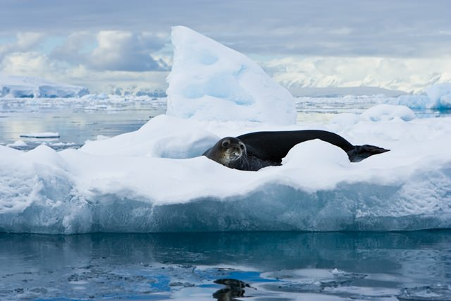 animale antarctica