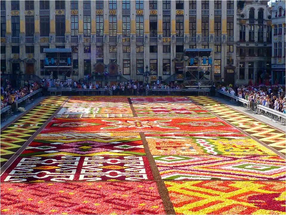 brussels flower carpet 2012 20