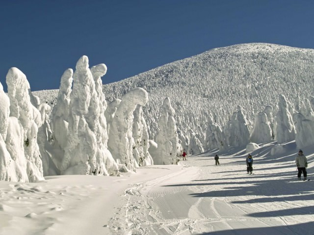 the-zao-onsen-hot-spring-and-ski-resort-in-the-mountains-of-the-yamagata-prefecture-is-known-for-its-ice-trees-trees-that-take-on-fascinating-shapes-due-to-heavy-amounts-of-snowfall-in-the