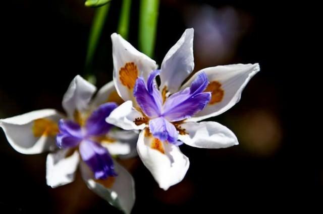 botanicgarden-melbourne
