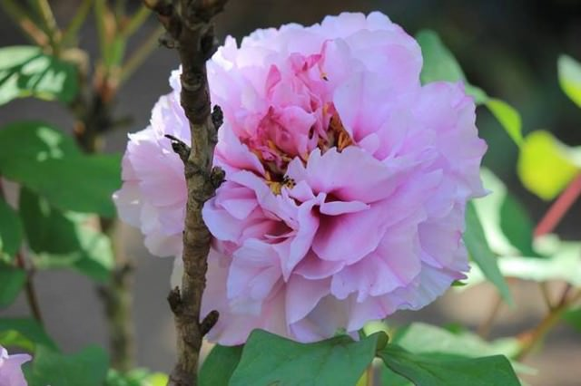 royal-botanic-garden-melbourne