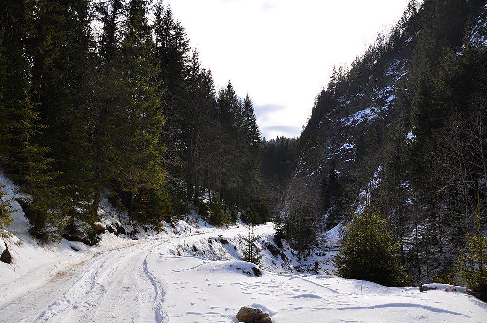 Valea-Narujei
